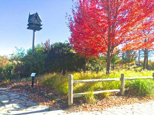 Birdhouse on a tall pole in a garden by a bright red tree.