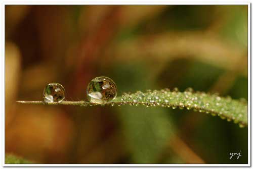 2 droplets balanced on a leaf