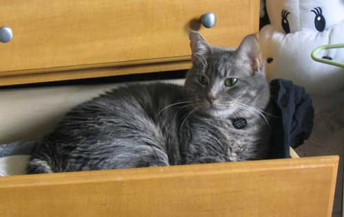 Cat happily lying in clothes drawer